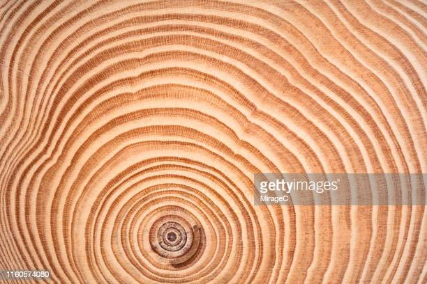 annual rings of tree trunk slice - natural pattern stock pictures, royalty-free photos & images