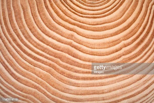 annual rings of tree trunk slice - effet graphique naturel photos et images de collection