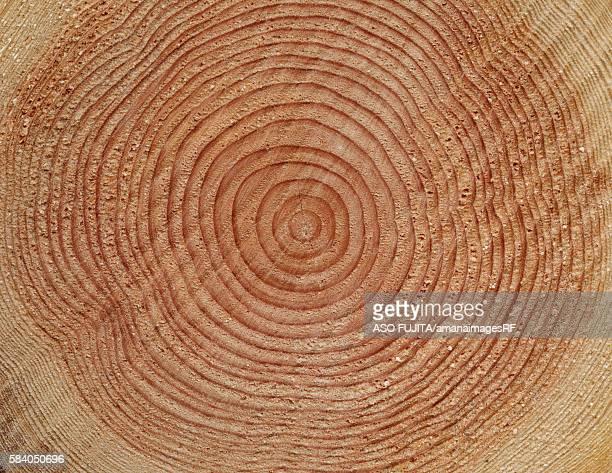 Annual tree rings