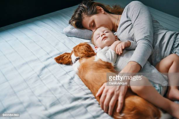 another day another power nap - animal stage stock photos and pictures