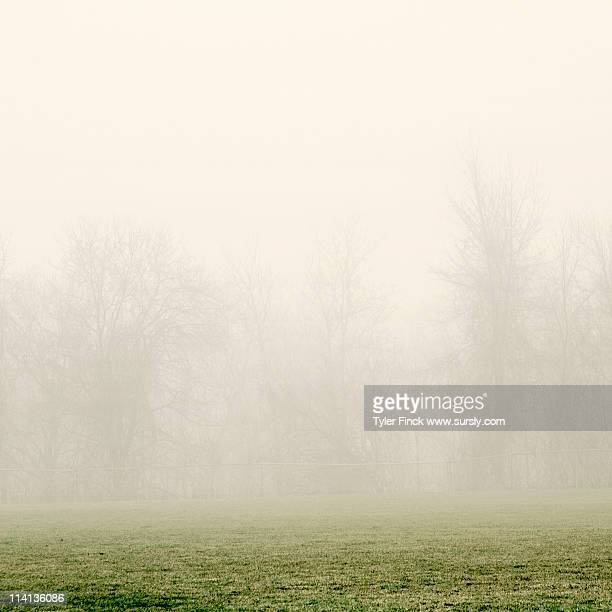another field, more fog - sursly stock pictures, royalty-free photos & images