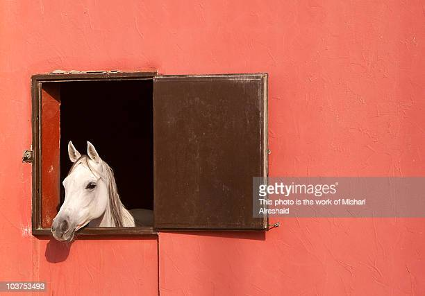 Another Horse Looking out the Window