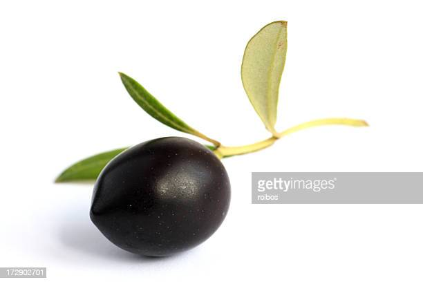another perfect black olive on twig with leaves (olea europeana)