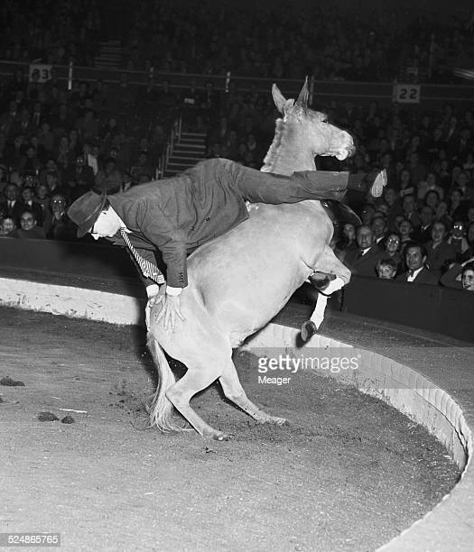 Another volunteer fails to keep his seat on one of Karl Kossmayer's Unrideable Mules one of the acts in the Bertram Mills Circus at Olympia London...