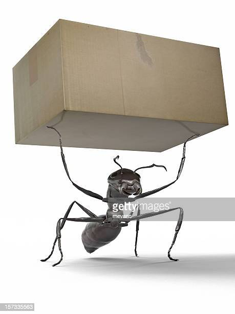 ant carrying a box - ants stock pictures, royalty-free photos & images