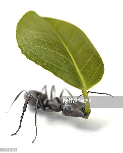 Ant Carrying a Leaf