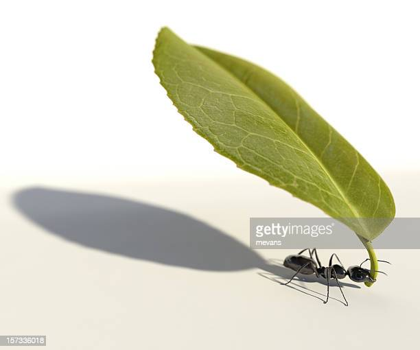 ant carrying a leaf - ants stock pictures, royalty-free photos & images