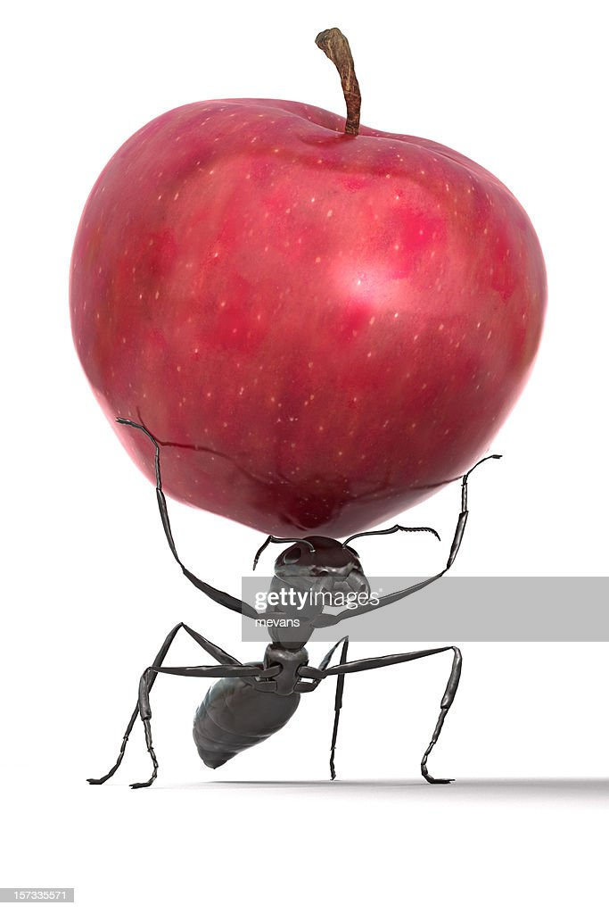 Ant Carrying An Apple High Res Stock Photo Getty Images