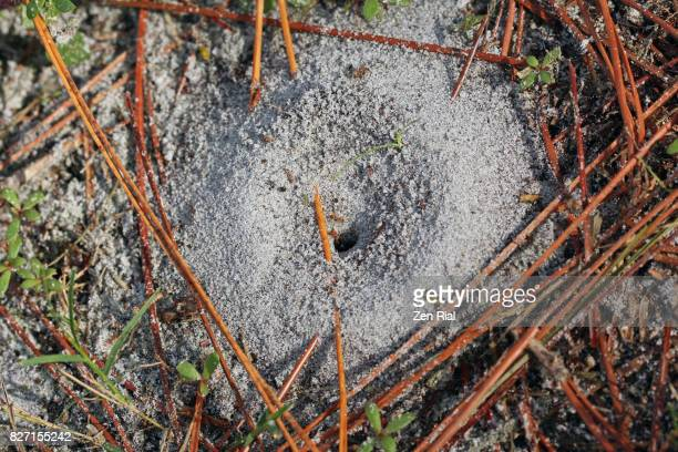 Ant Hill or Ant Nest