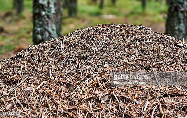 60 Top Anthill Pictures, Photos, & Images - Getty Images