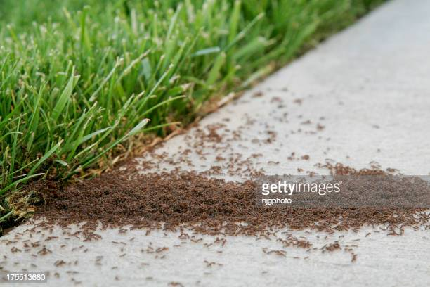 Ant Infestation Pest Control
