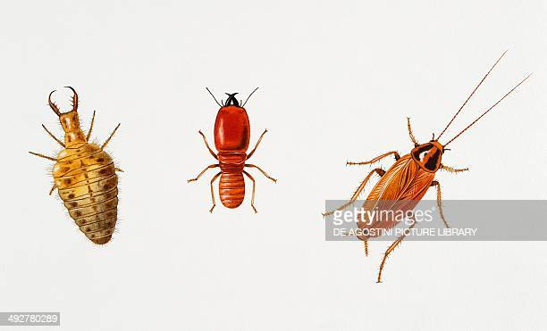 Ant lion African termite and American cockroach Artwork by Alan Male