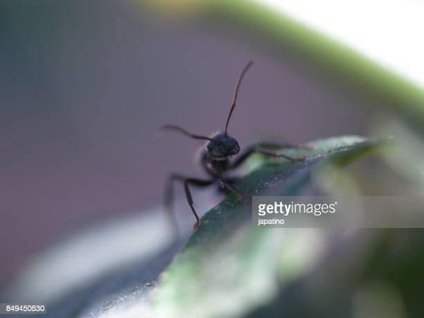 Ant on the leaf of a plant
