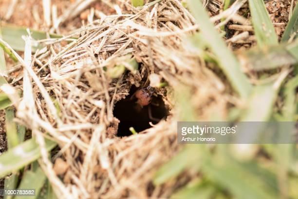 Ant working garding the nest. Macro photo.
