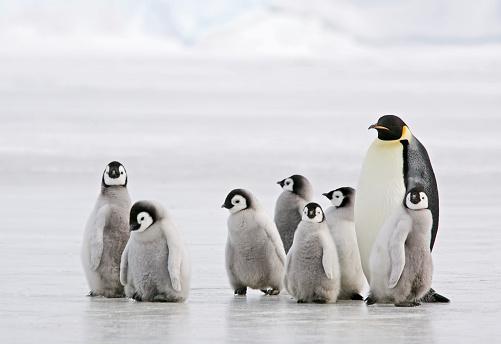 Antarctic Babysitter 95157138