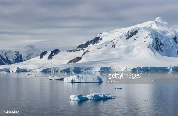 Foca Antártica de hielo flotante