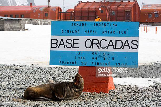 antarctic fur seals at base orcadas which is an argentine scientific station in antarctica, and the oldest of the stations in antarctica still in operation. it is located on laurie island, one of the south orkney islands, just off the antarctic peninsular - south orkney island stock pictures, royalty-free photos & images