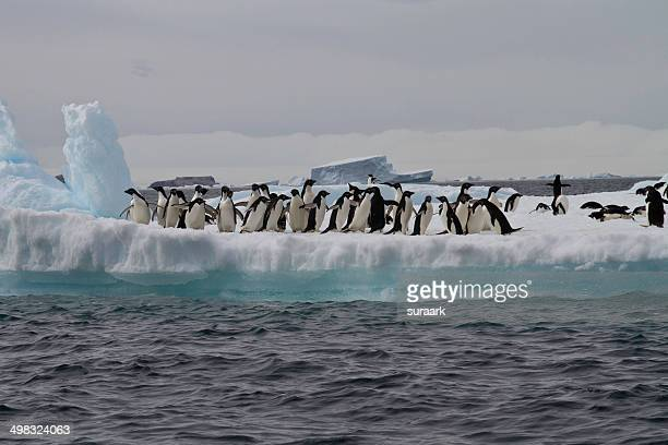 antarctic sound in antarctica - antarctic sound stock pictures, royalty-free photos & images