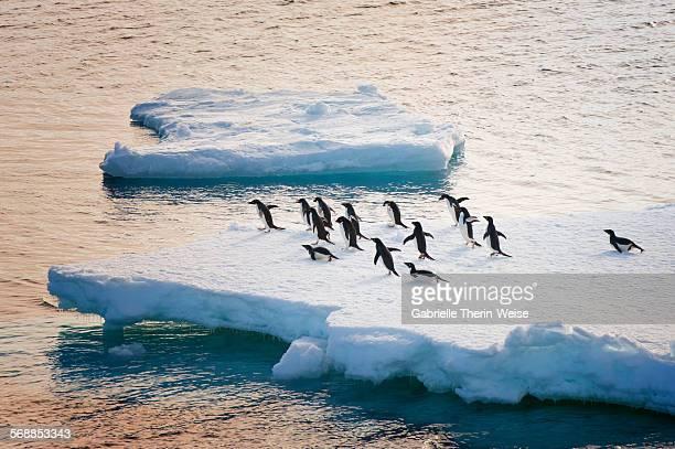 antarctic sound - antarctic sound stockfoto's en -beelden