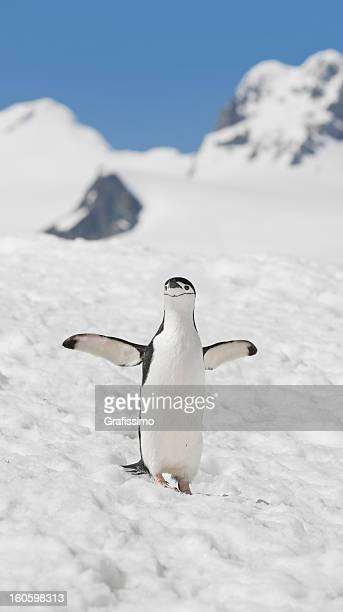 antarctica chinstrap penguin on halfmoon island - chinstrap penguin stock pictures, royalty-free photos & images