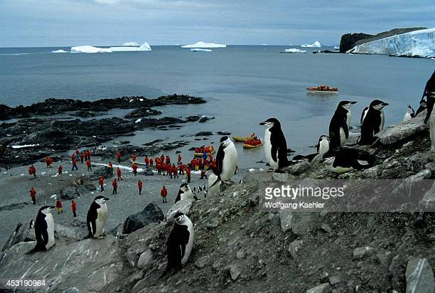 Antarctica Chinstrap Penguins On Elephant Island With Tourists Background