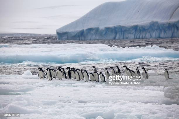 Antarctica cruise on Boreal ship Paulet island located north of the shetland islands The expedition wessel Antarctic was crushed by pack ice and sank...