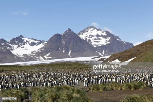 Antarctica cruise on Boreal ship South Georgia island UK property Salisbury Bay where a huge colony of king penguins is settled