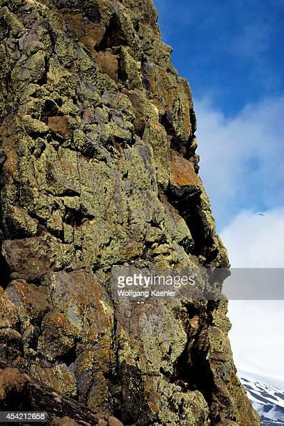 Antarctica Deception Isl Whaler's Bay Pintado Petrels Nesting On Cliffs