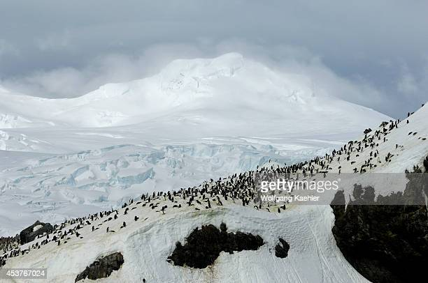 Antarctica, Elephant Island, Point Wild, Chinstrap Penguin Colony Buried Under Snow .