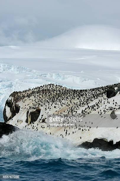 Antarctica Elephant Island Point Wild Chinstrap Penguin Colony Buried Under Snow