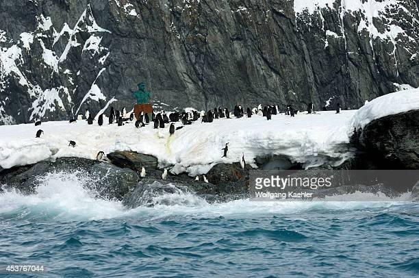 Antarctica Elephant Island Point Wild Chinstrap Penguin Colony Buried Under Snow Statue Of Piloto Prado Chilean Captian To Rescue Shackleton's Men