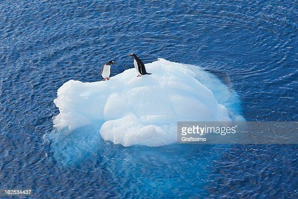 Antarctica gentoo penguin sitting on small iceberg