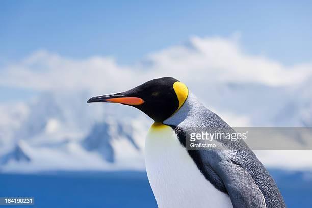 antarctica king penguin head - koningspinguïn stockfoto's en -beelden