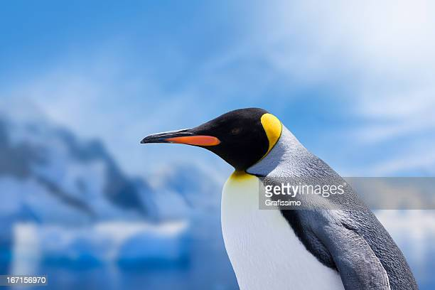 antarctica king penguin head - king penguin stock pictures, royalty-free photos & images