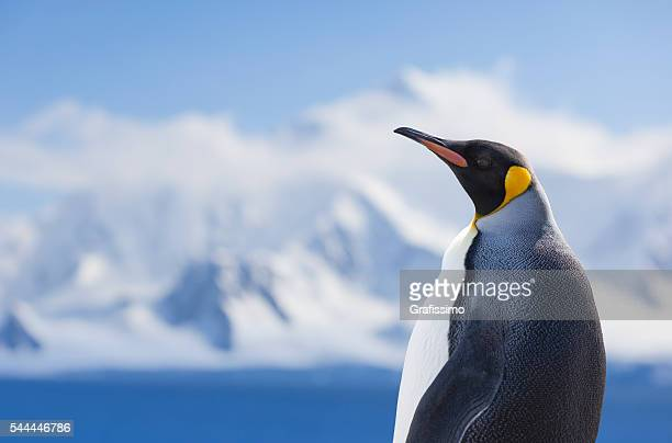 antarctica king penguin snowy mountain - pinguïn stockfoto's en -beelden