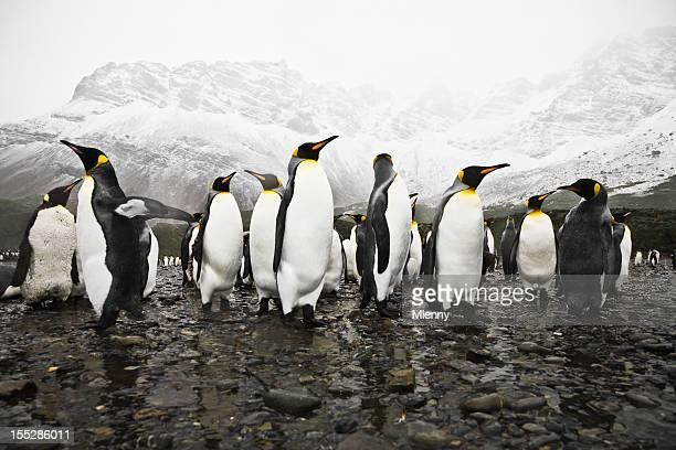 Antártida King Penguins South Georgia círculo Polar