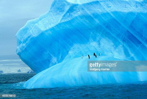 Antarctica, Near Elephant Island, Chinstrap Penguins On Blue Iceberg.