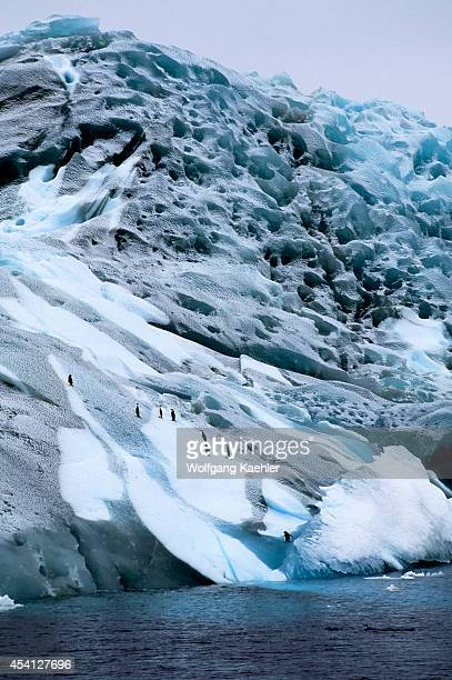 Antarctica, Near South Orkney Island, Marbled Iceberg With Chinstrap Penguins.