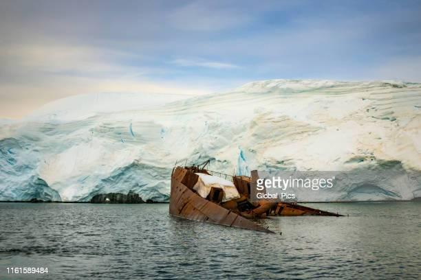 antarctica - port lockroy - aquatic mammal stock pictures, royalty-free photos & images