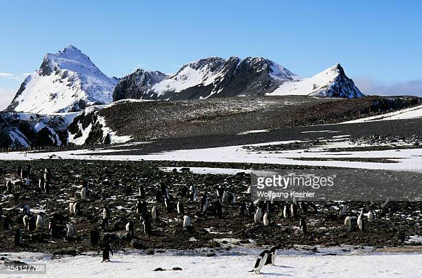 Antarctica, South Orkney Island, Laurie Island, Adelie And Chinstrap Penguins.