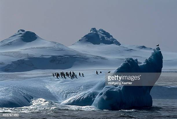 Antarctica South Orkney Islands Chinstrap Penguins On Iceberg