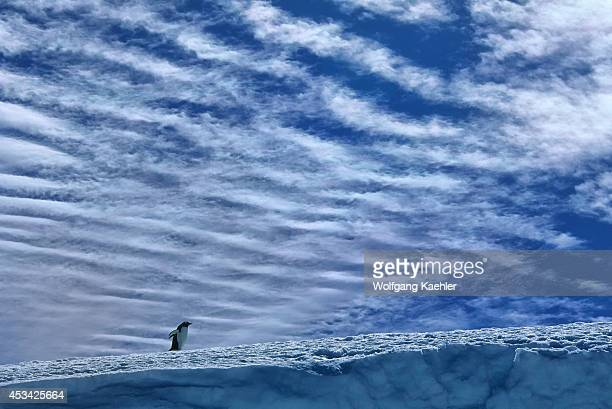 Antarctica, South Orkney Islands, Laurie Island, Gentoo Penguin Walking On Snow, Clouds In Background.