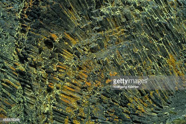 Antarctica South Shetland Islands King George Island Lichens And Grass Growing On Basalt Lava Rocks