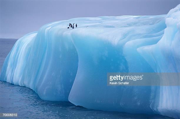 Antarctica, Weddell Sea, chinstrap penguins resting on blue iceberg