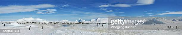 Antarctica Weddell Sea Snow Hill Island Panorama Photo Of Emperor Penguin Colony Aptenodytes forsteri And Icebergs