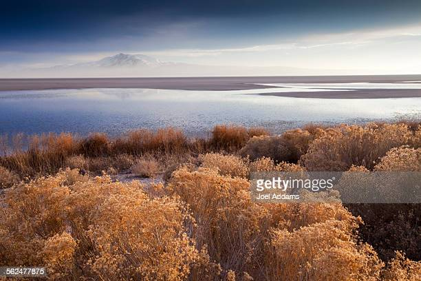 antelope island state park at sunset, utah - great salt lake stock pictures, royalty-free photos & images