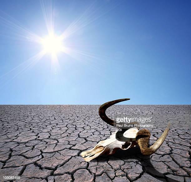 antelope skull - lake bed fotografías e imágenes de stock