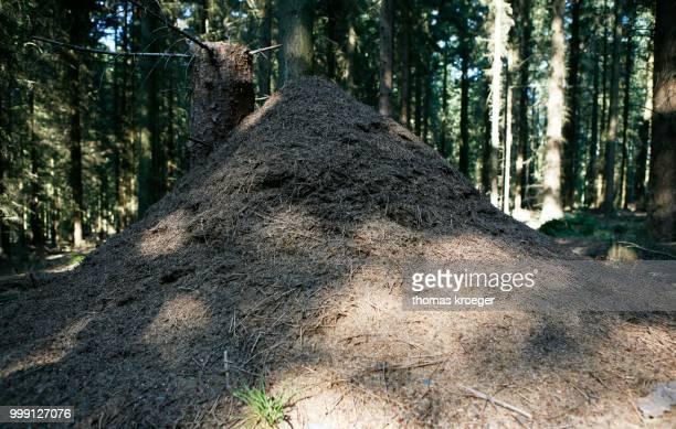 Anthill in the woods, Siebengebirge range near Bad Honnef, North Rhine-Westphalia, Germany