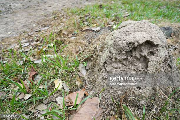 anthill mound mud floor florest