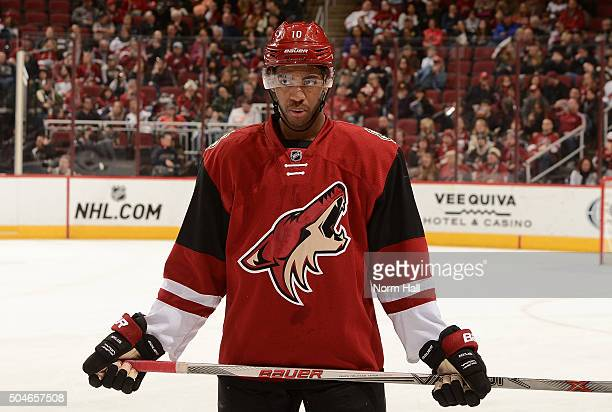 Anthony Duclair of the Arizona Coyotes gets ready during a faceoff against the Nashville Predators at Gila River Arena on January 9 2016 in Glendale...